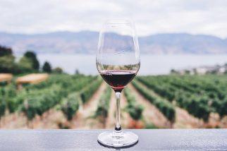 comprar vinho no exterior